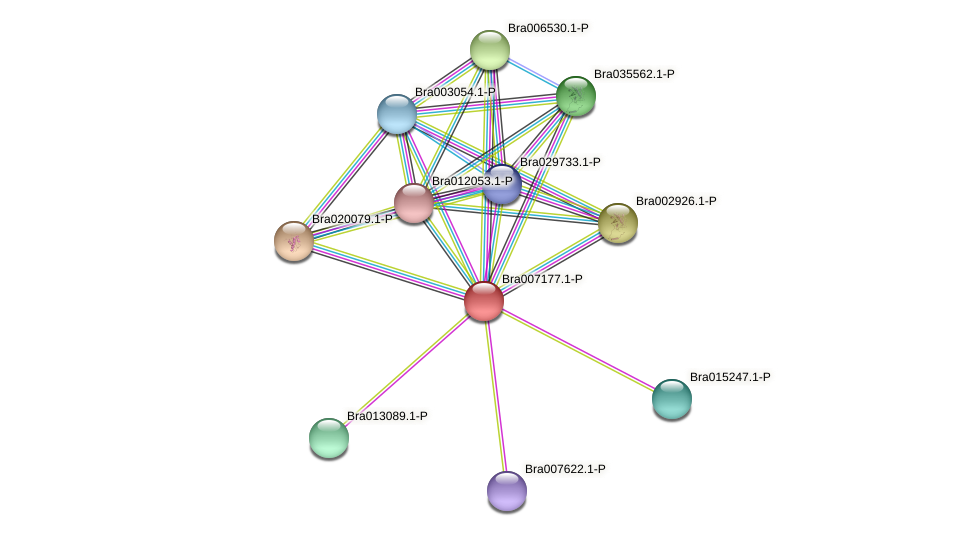Bra007177 protein (Brassica rapa) - STRING interaction network
