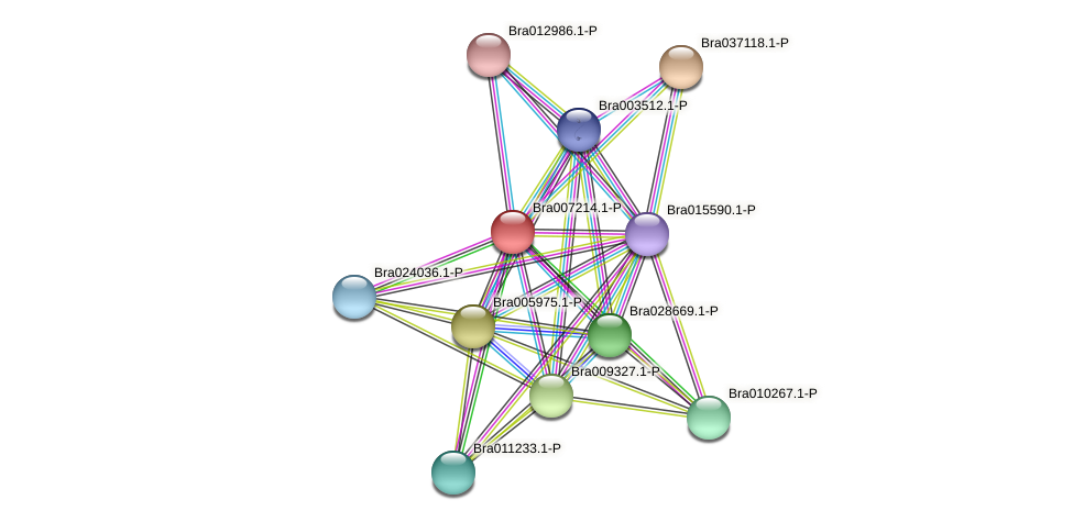Bra007214 protein (Brassica rapa) - STRING interaction network