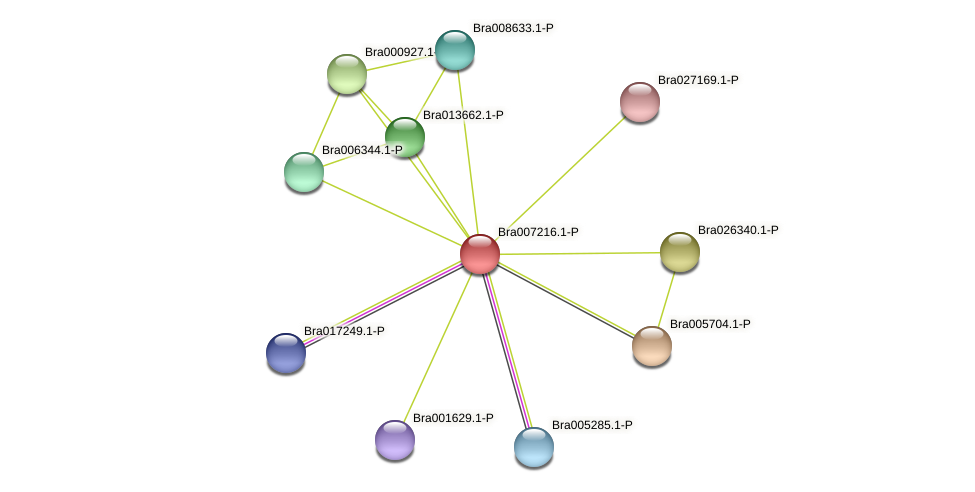 Bra007216 protein (Brassica rapa) - STRING interaction network