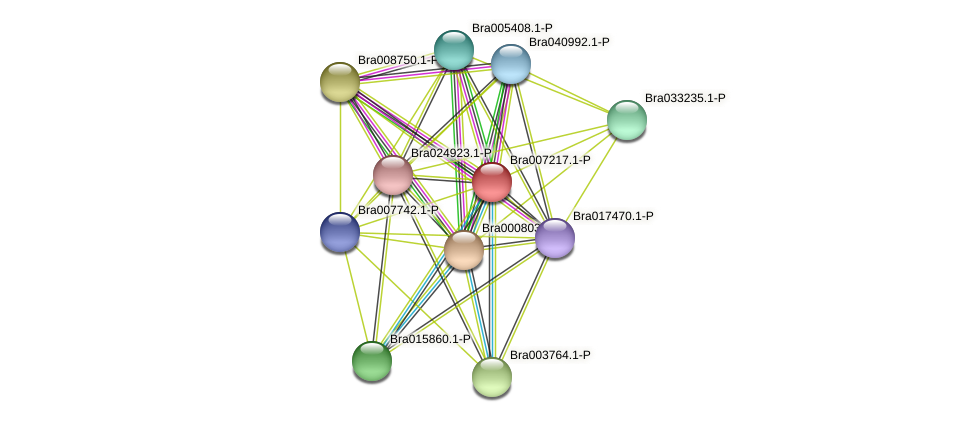 Bra007217 protein (Brassica rapa) - STRING interaction network