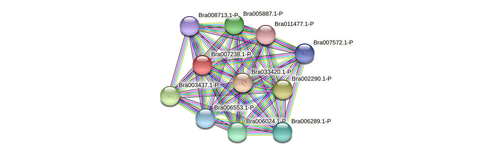 Bra007238 protein (Brassica rapa) - STRING interaction network