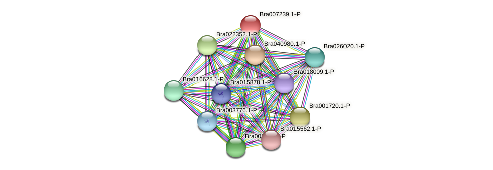 Bra007239 protein (Brassica rapa) - STRING interaction network