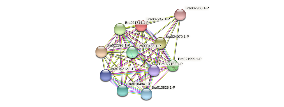 Bra007247 protein (Brassica rapa) - STRING interaction network