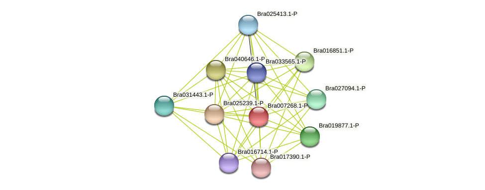 Bra007268 protein (Brassica rapa) - STRING interaction network