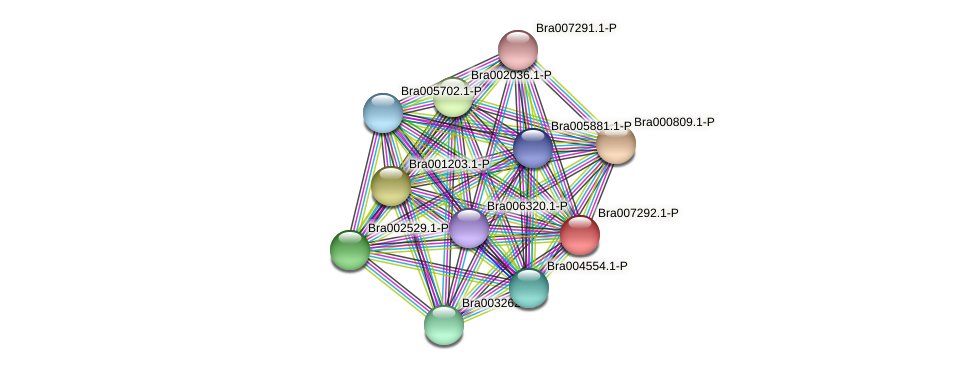 Bra007292 protein (Brassica rapa) - STRING interaction network