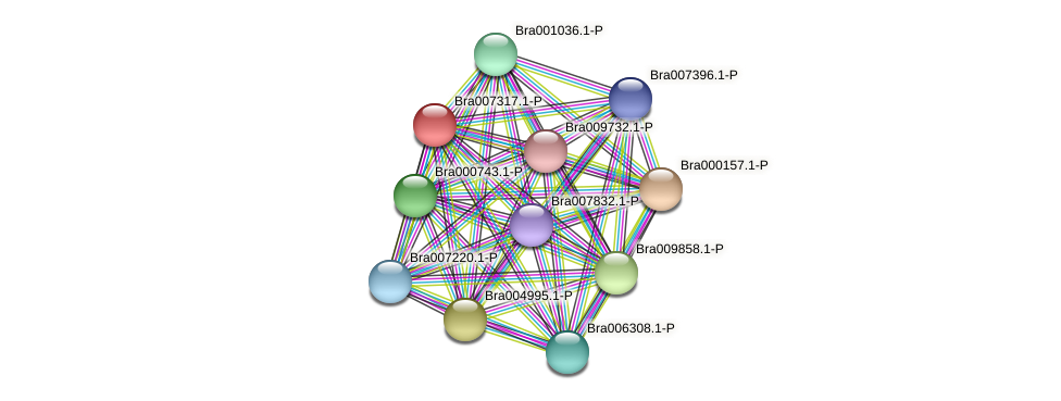 Bra007317 protein (Brassica rapa) - STRING interaction network