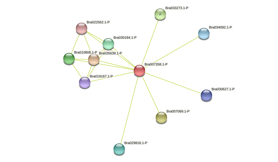 Bra007358 protein (Brassica rapa) - STRING interaction network