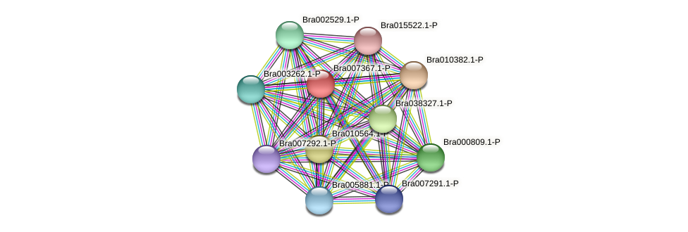 Bra007367 protein (Brassica rapa) - STRING interaction network