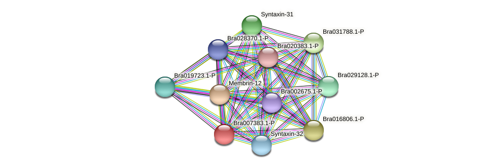 Bra007383 protein (Brassica rapa) - STRING interaction network