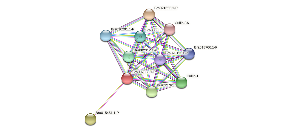 Bra007388 protein (Brassica rapa) - STRING interaction network