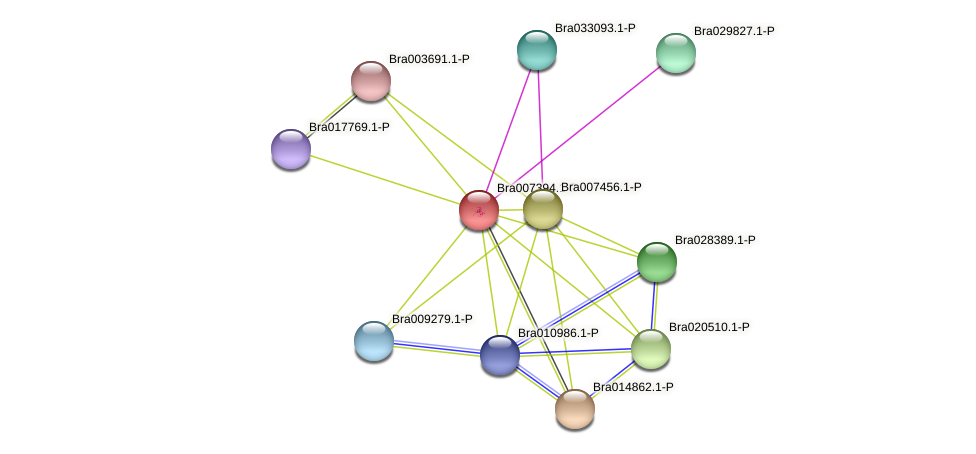 Bra007394 protein (Brassica rapa) - STRING interaction network