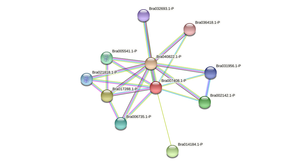 Bra007408 protein (Brassica rapa) - STRING interaction network