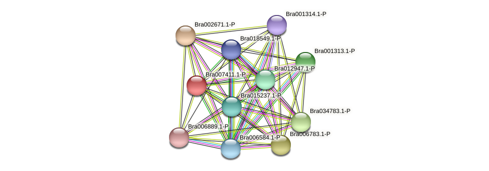 Bra007411 protein (Brassica rapa) - STRING interaction network