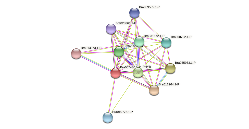 Bra007430 protein (Brassica rapa) - STRING interaction network