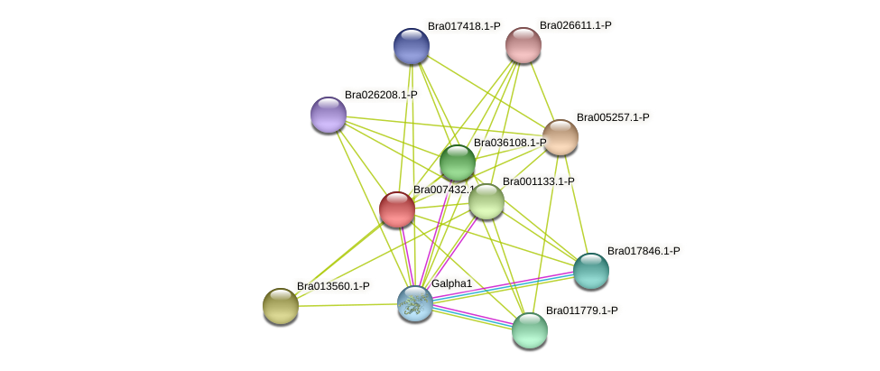 Bra007432 protein (Brassica rapa) - STRING interaction network