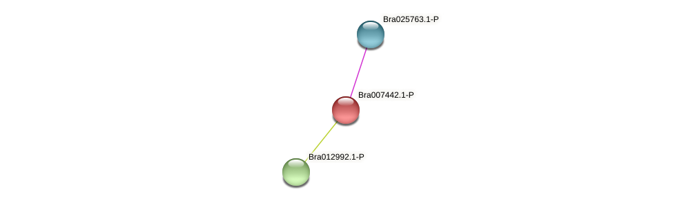 Bra007442 protein (Brassica rapa) - STRING interaction network