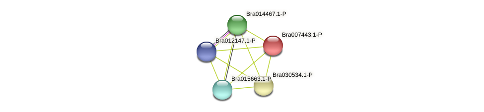 Bra007443 protein (Brassica rapa) - STRING interaction network