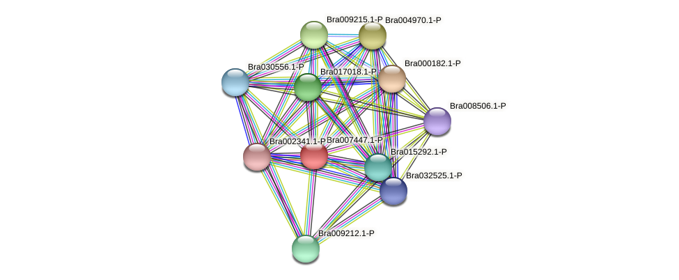 Bra007447 protein (Brassica rapa) - STRING interaction network