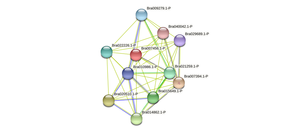 Bra007456 protein (Brassica rapa) - STRING interaction network