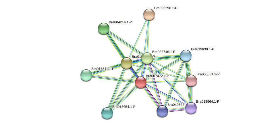 Bra007472 protein (Brassica rapa) - STRING interaction network