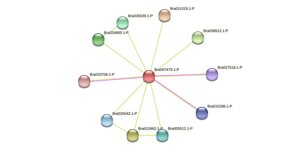 Bra007479 protein (Brassica rapa) - STRING interaction network