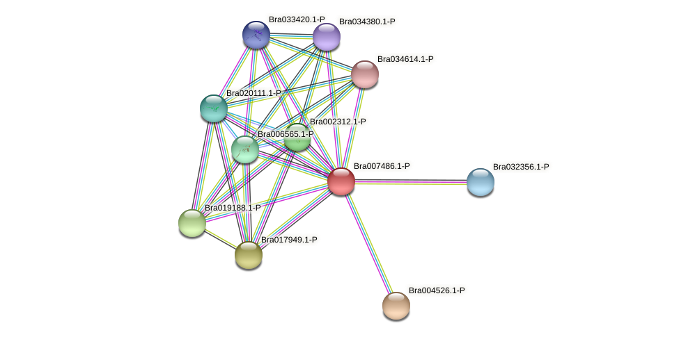 Bra007486 protein (Brassica rapa) - STRING interaction network
