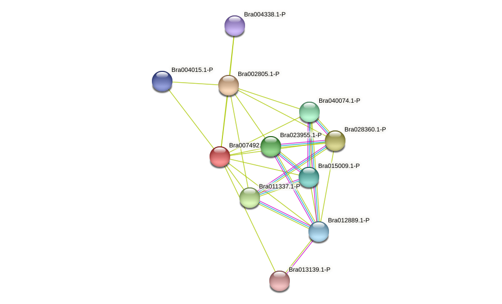 Bra007492 protein (Brassica rapa) - STRING interaction network