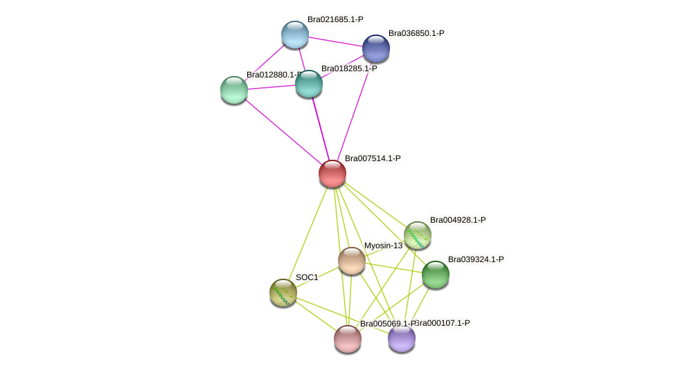 Bra007514 protein (Brassica rapa) - STRING interaction network