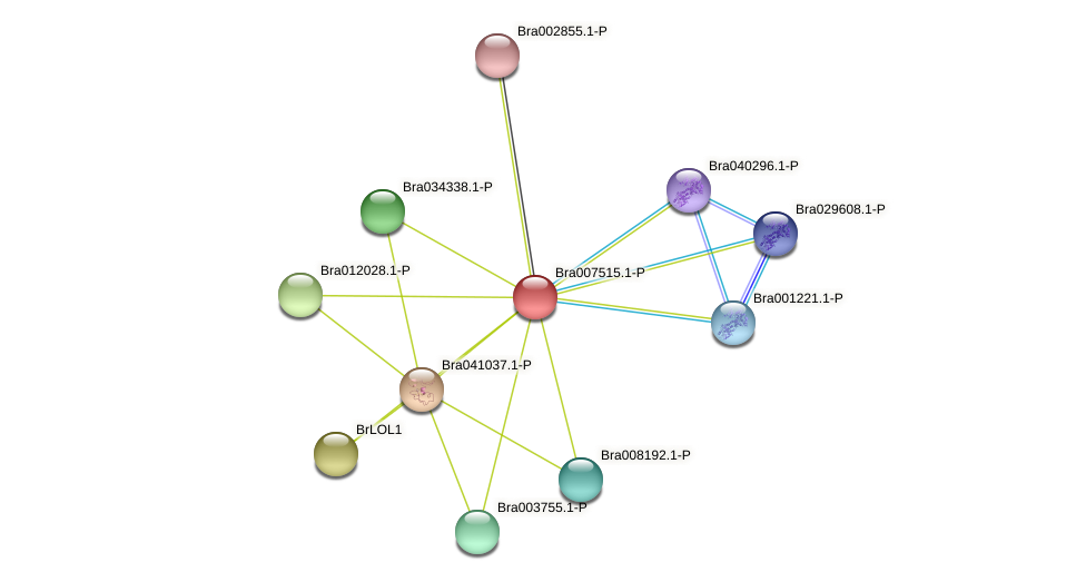 Bra007515 protein (Brassica rapa) - STRING interaction network