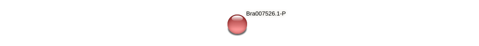 Bra007526 protein (Brassica rapa) - STRING interaction network