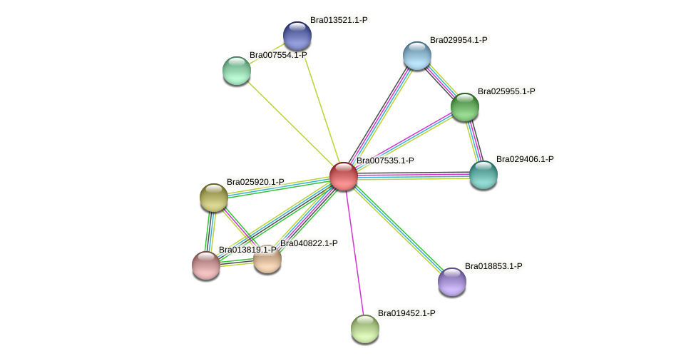 Bra007535 protein (Brassica rapa) - STRING interaction network