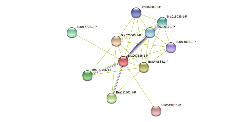 Bra007536 protein (Brassica rapa) - STRING interaction network