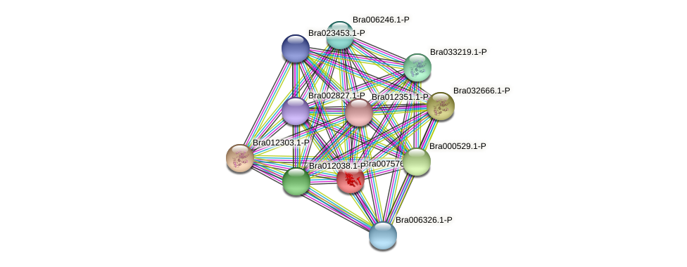 Bra007576 protein (Brassica rapa) - STRING interaction network
