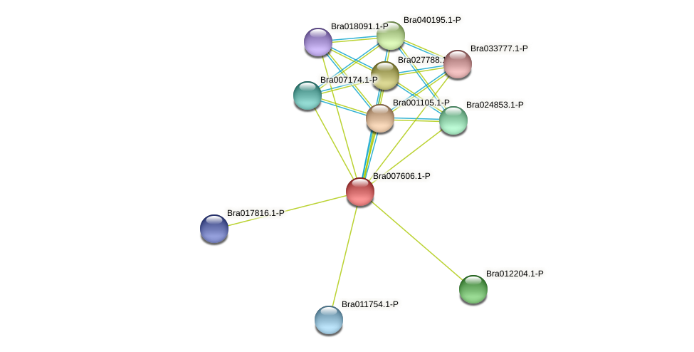 Bra007606 protein (Brassica rapa) - STRING interaction network