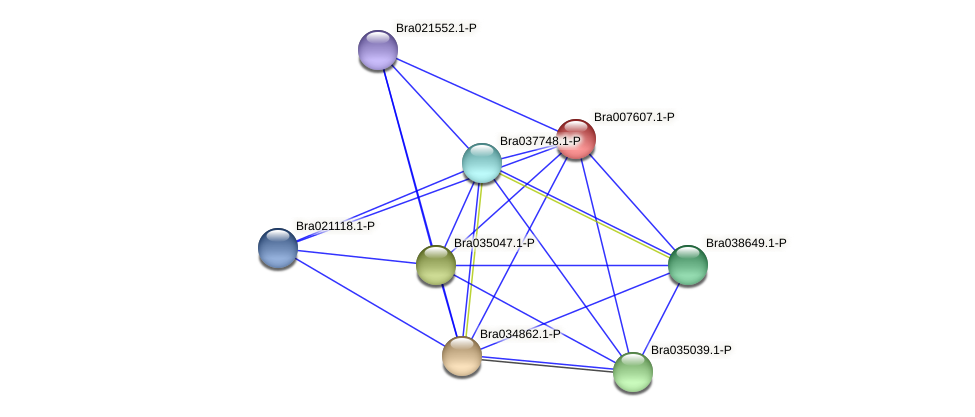 Bra007607 protein (Brassica rapa) - STRING interaction network