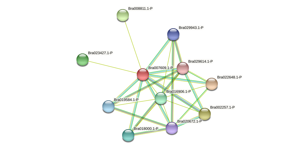 Bra007609 protein (Brassica rapa) - STRING interaction network