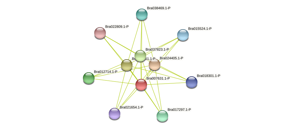 Bra007631 protein (Brassica rapa) - STRING interaction network