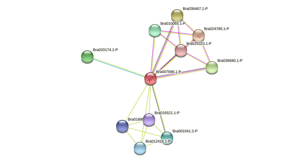Bra007696 protein (Brassica rapa) - STRING interaction network