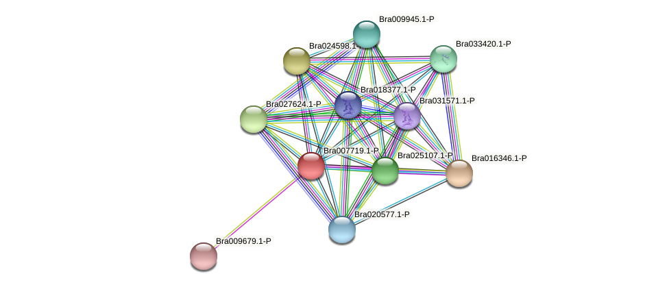 Bra007719 protein (Brassica rapa) - STRING interaction network