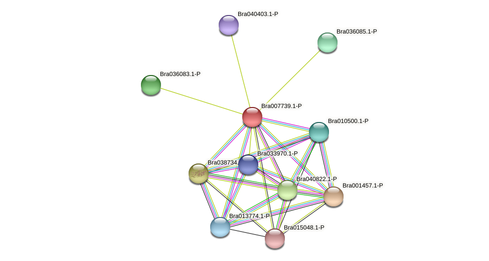 Bra007739 protein (Brassica rapa) - STRING interaction network