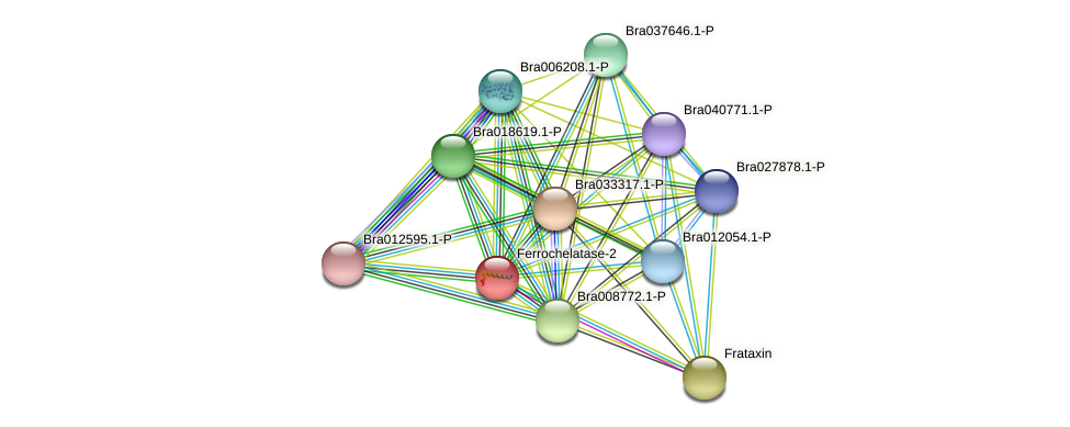 Bra007748 protein (Brassica rapa) - STRING interaction network