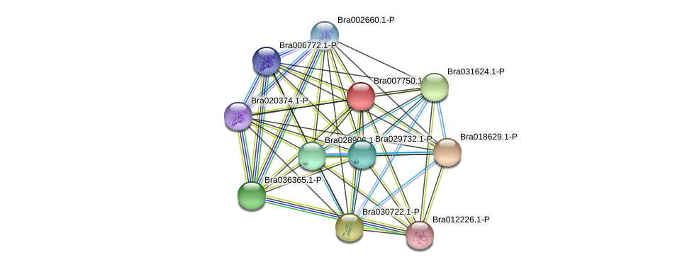 Bra007750 protein (Brassica rapa) - STRING interaction network