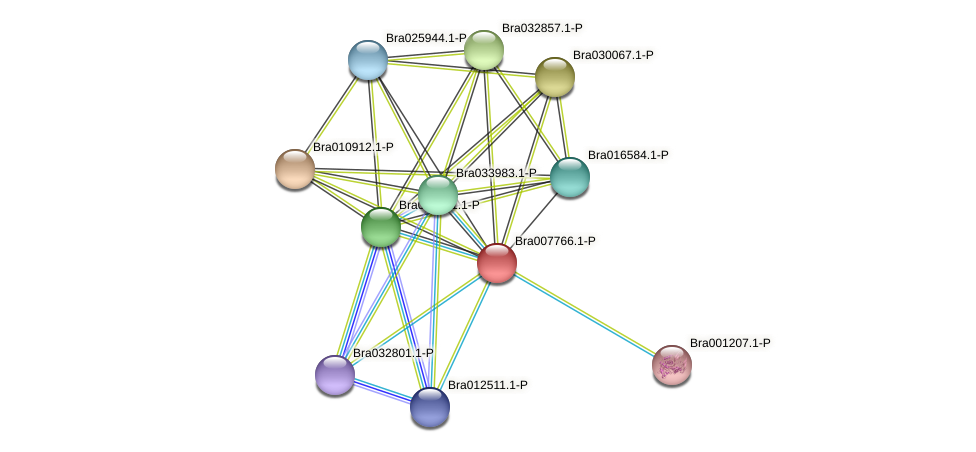 Bra007766 protein (Brassica rapa) - STRING interaction network