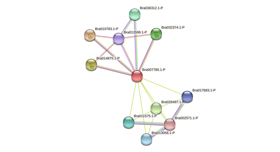 Bra007785 protein (Brassica rapa) - STRING interaction network