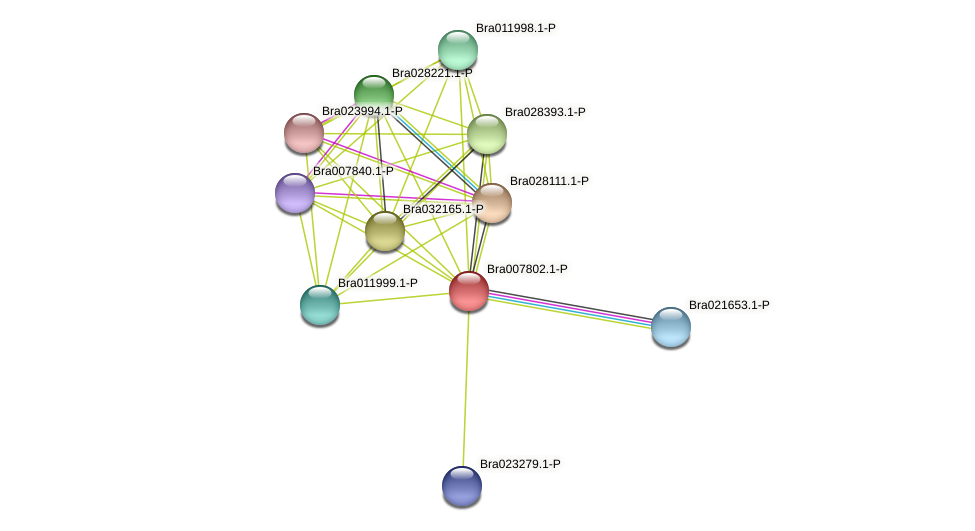 Bra007802 protein (Brassica rapa) - STRING interaction network