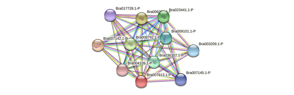 Bra007813 protein (Brassica rapa) - STRING interaction network