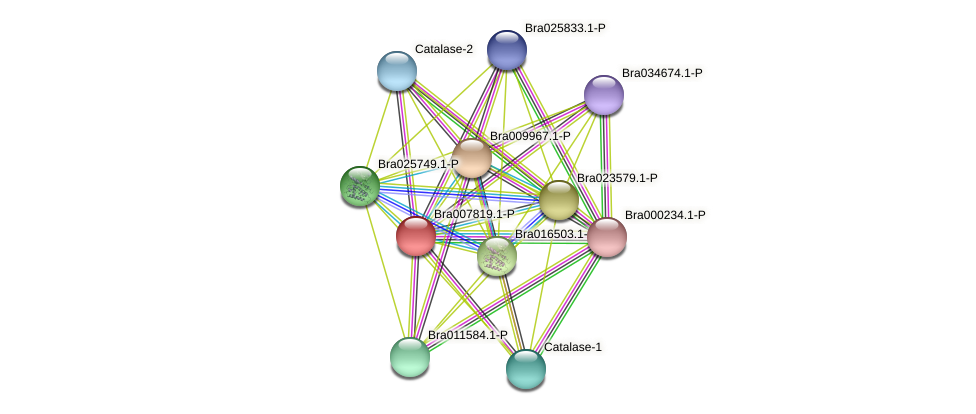 Bra007819 protein (Brassica rapa) - STRING interaction network
