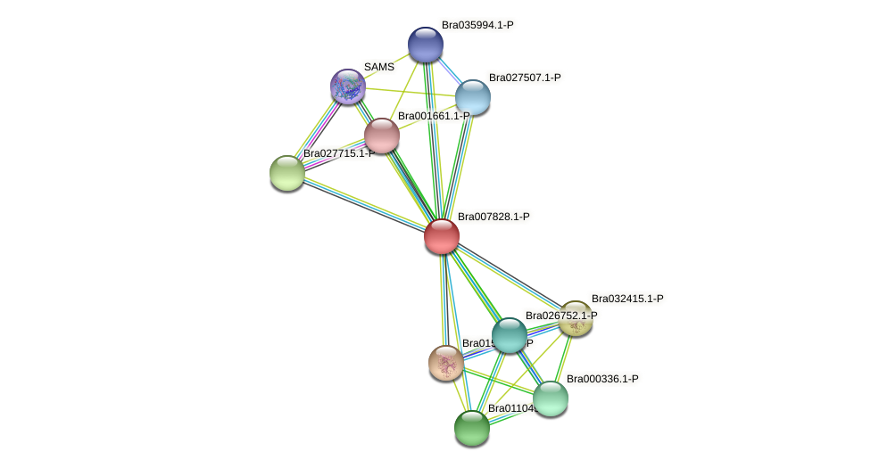 Bra007828 protein (Brassica rapa) - STRING interaction network