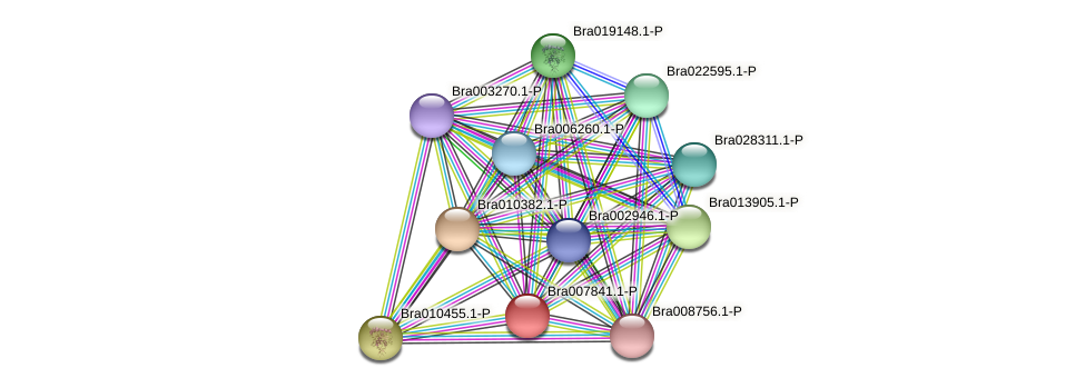 Bra007841 protein (Brassica rapa) - STRING interaction network