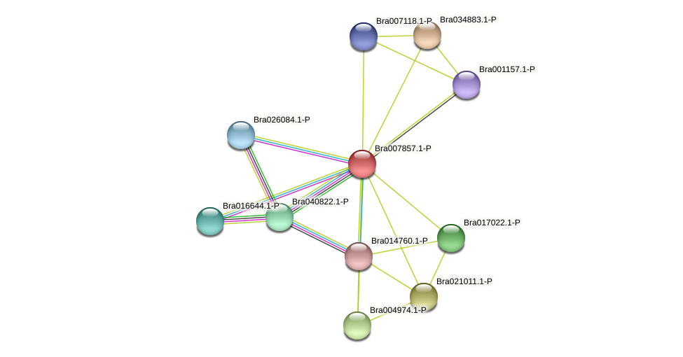 Bra007857 protein (Brassica rapa) - STRING interaction network